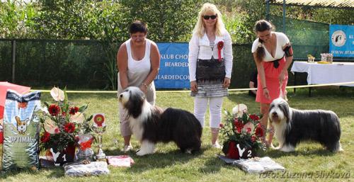 ľava: BOB Belong To You CALIMERO Amore Mio a BOS DEANA Kasiterit, foto Zuzana Slivková