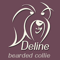 kennel Deline bearded collie