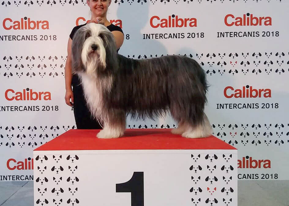 International Dog Show Brno 2019