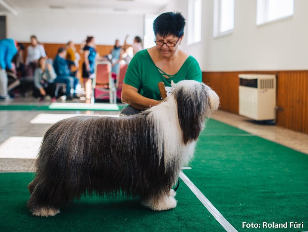 Special show Bobtail&Bearded collie klub 21.9.2019 Dubova, judge Johan Andersson/SE