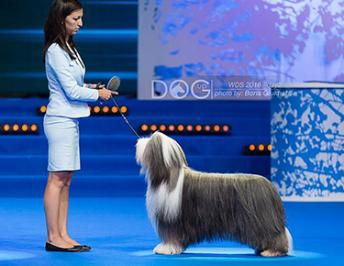 World Dog Show Moscow